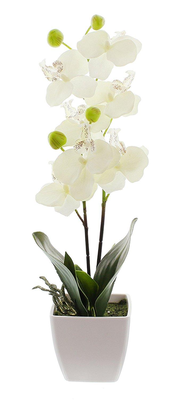 deko orchidee im topf. Black Bedroom Furniture Sets. Home Design Ideas