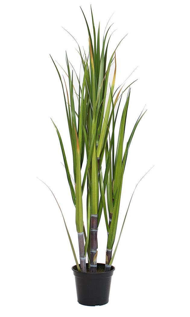 Deko-Topfpflanze Bambus